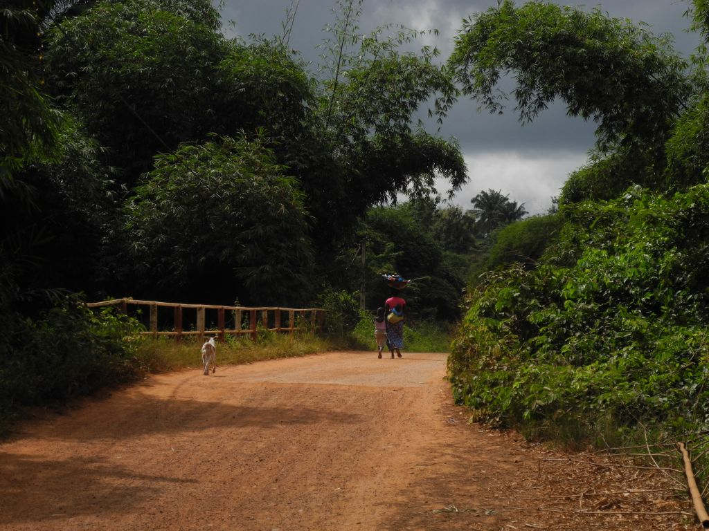 Through the West African Forest