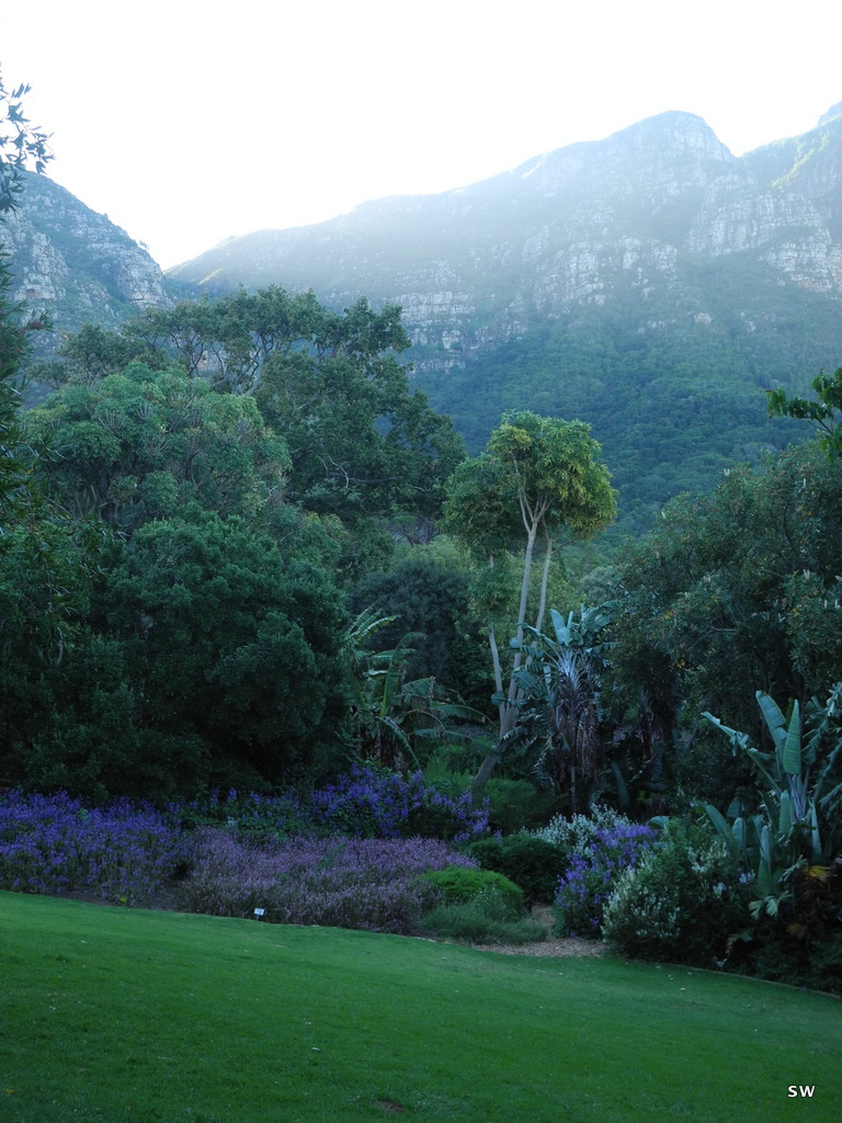 a picknick in Kirstenbosch